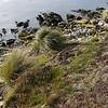 3963---Carcass-Island---2011-03-07---P1100257