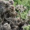 4009---Carcass-Island---2011-03-07---P1100416