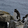 4192---New-Island---2011-03-07---P1100602
