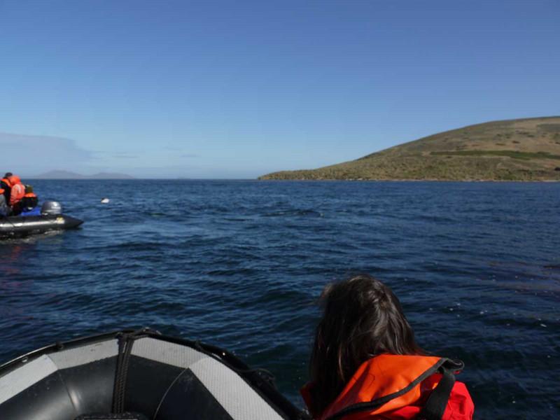 4104---Carcass-Island---2011-03-07---P1100548