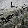 3918---Carcass-Island---2011-03-07---P1100403