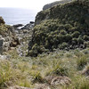 4153---New-Island---2011-03-07---P1100688