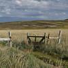 4132---New-Island---2011-03-07---P1100861