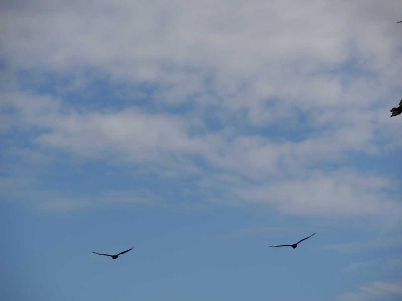 4089---Carcass-Island---2011-03-07---P1100398