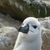 4265---New-Island---2011-03-07---P1020446