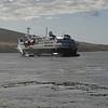 3911---Carcass-Island---2011-03-07---P1100261