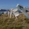 3945---Carcass-Island---2011-03-07---P1100457