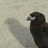 4343---New-Island---2011-03-07---P1020489