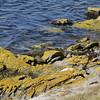 4034---Carcass-Island---2011-03-07---P1100478
