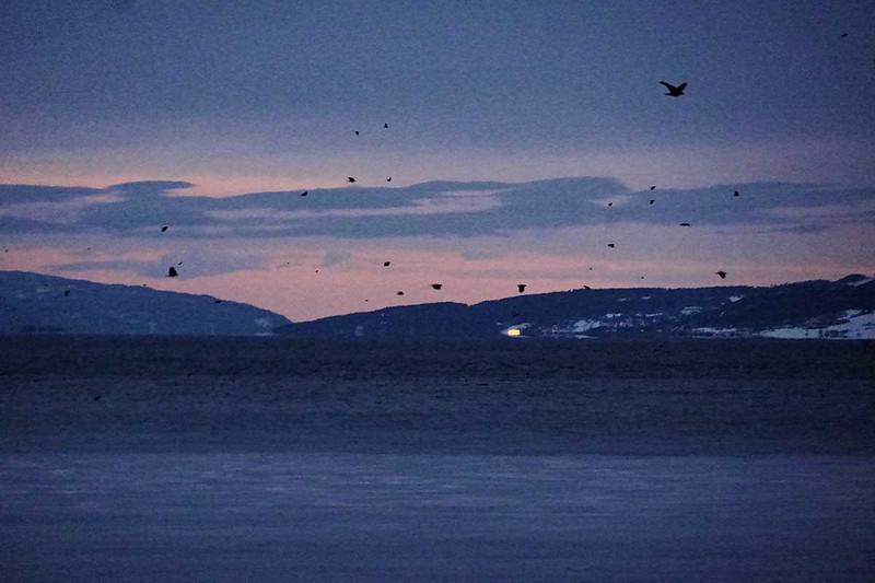 0906---2013-02-Norway---F---DSCDSC0397001205-