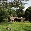 Scenes from roadside rural Gabon.