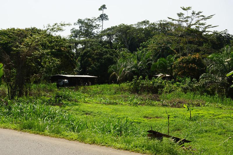 Pastoral scenes from roadside rural Gabon.