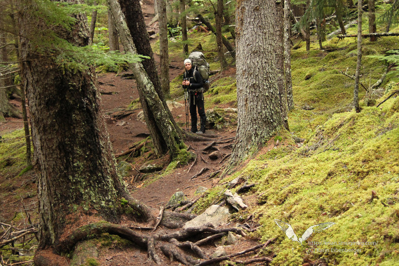 August 2011. Chilkoot Trail, day 1 Dyea - Canyon City.