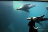 August 2011. Seward - sea lions.