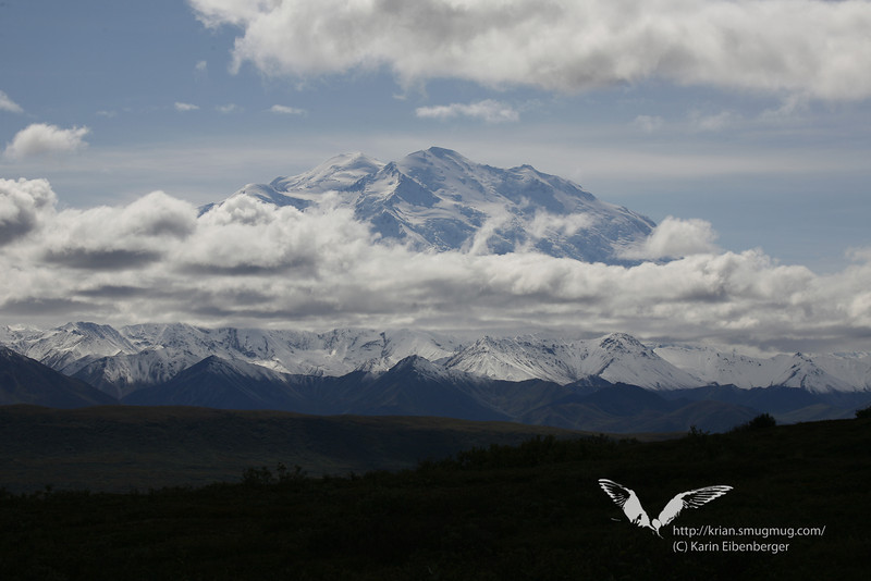 August 2011. Mt. Denali.