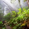 Taryn hikes through the rain forest of the West Coast Trail. A light fog permeates the forest as sunlight pierces ithrough the canopy.