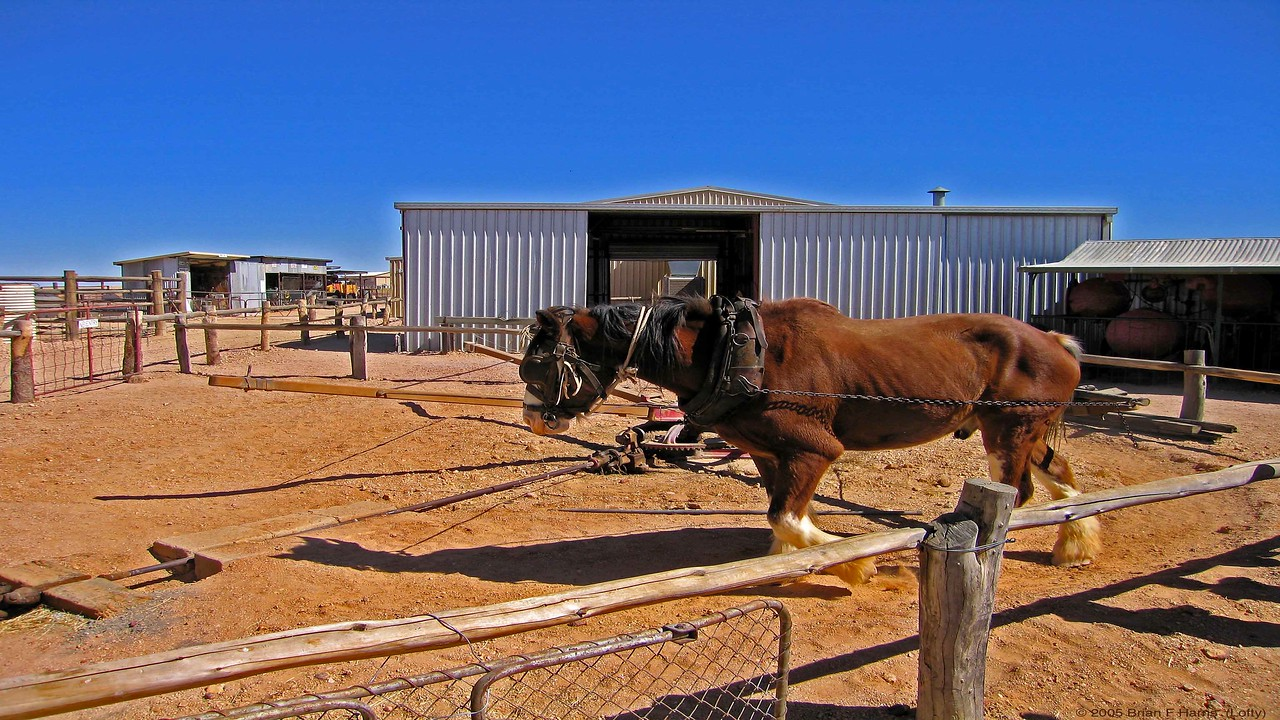 Horse walks circle to drive steel shaft at left drives a chaff cutter mchine
