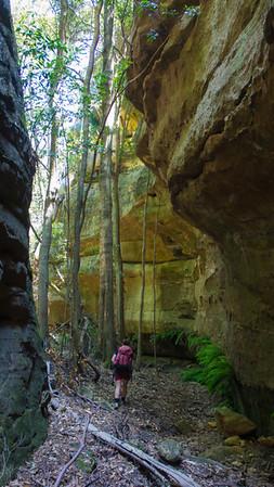 Nice open canyon walking.