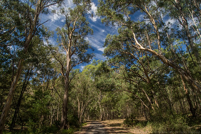 The road to Coorongooba Camp Ground