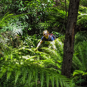 Kathrin descends through a fern grove on the way into the canyon.