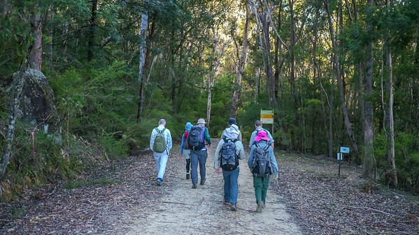 We walk along the Medlow Gap Management Trail to the start of our ridge.