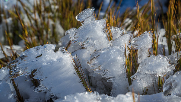 Wind blown ice on the snow grass.
