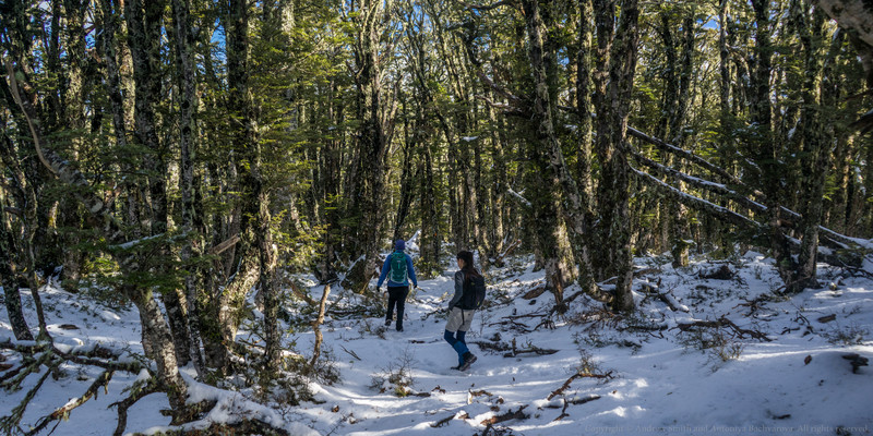We enter beech forest and there's still quite a lot of snow.