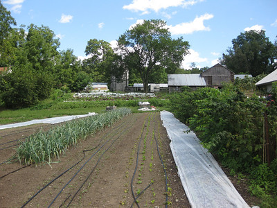 "The beds where Wes will be managing the ""Second Wind"" CSA for the 2012 season."