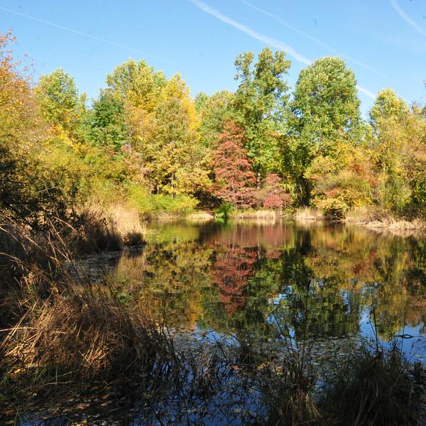 Peaceful Pond