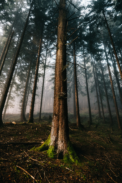 A misty hike in the forrest around Innsbruck, Nordkette, Austria 2016