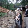 Feeding giraffe Nairobi