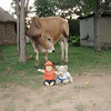 Spencer and Ria and the big cow!