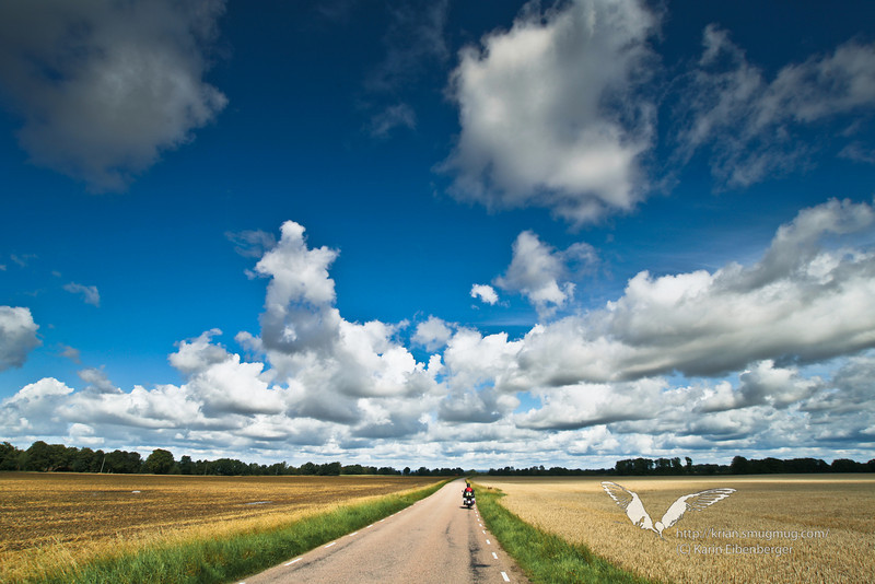 South of Sweden. Endless cornfields and blue sky.