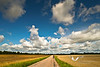 South of Sweden. Corn fields, small streets and beautiful, endless skies.