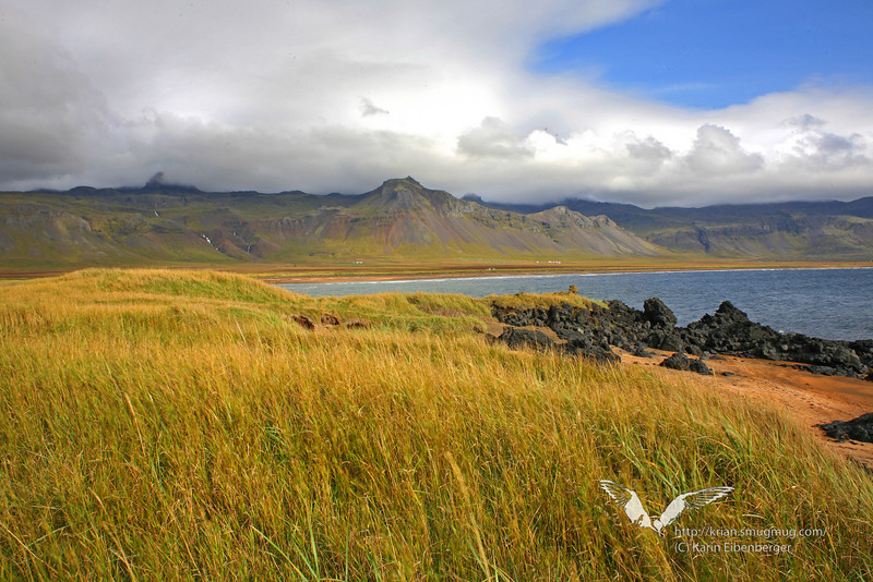 At Snæfellsnes peninsula. Red sand, green grass and black rocks. Fantastic, surreal landscapes there!