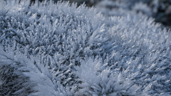 Frost on a river rock.