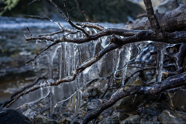 Ice formations on a fallen branch.