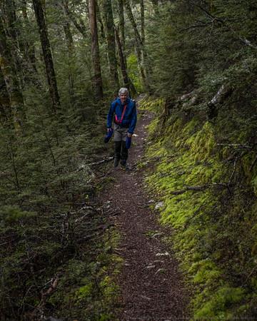 Pretty beech forest walking.