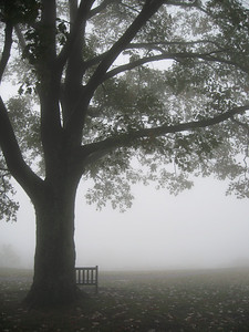 Bench lost in the fog