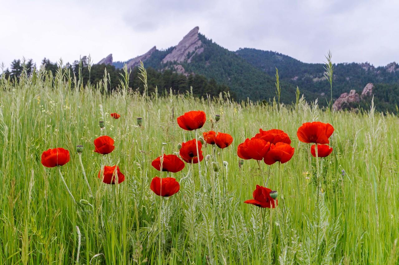 Chatauqua Park, Boulder, CO, USA