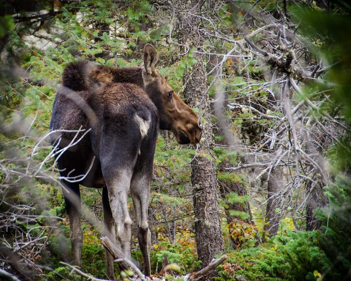 Wild Basin, Rocky Mountain NP, CO, USA