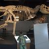Bede meets a tyrannosaurus cousin