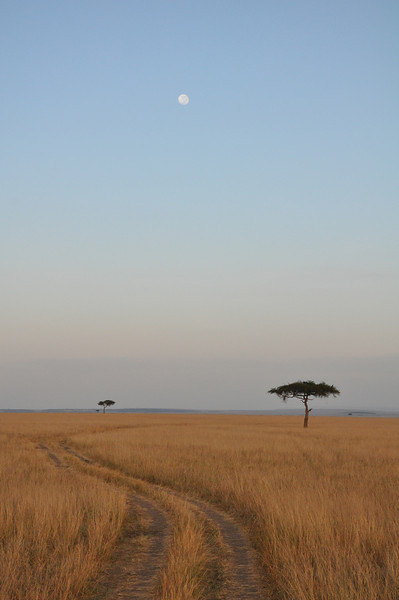 Heading out onto the Masi Mara early in the morning