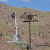 Almost every pole had these large nests with a couple birds in them.