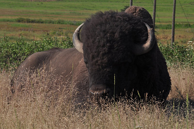 National Bison Range (Wildlife Refuge)