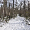 The trail to the cabin was about a 10 minute walk through the snow
