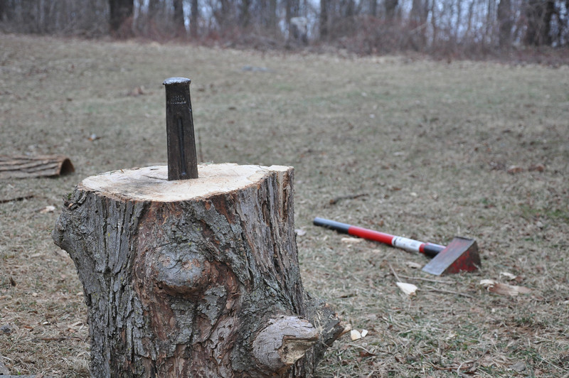 Possibly the best part of camping, cutting wood.