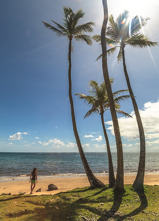Palm Tree Cove