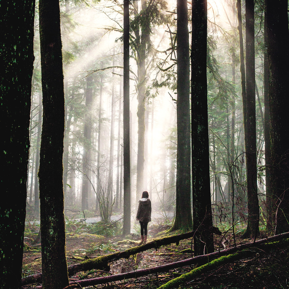 Lulu Lovering in the Foggy British Columbia Forests