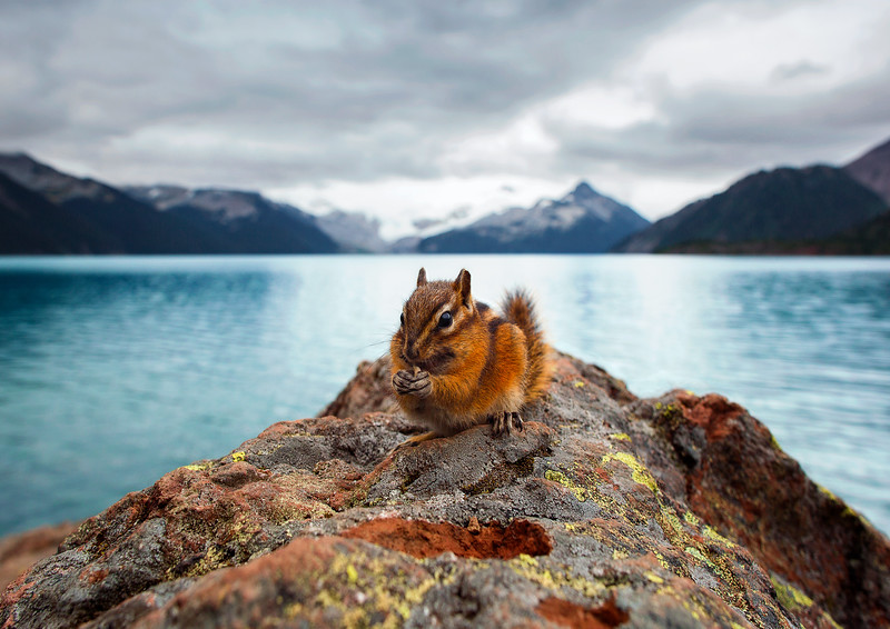 Making Friends at Garibaldi Lake